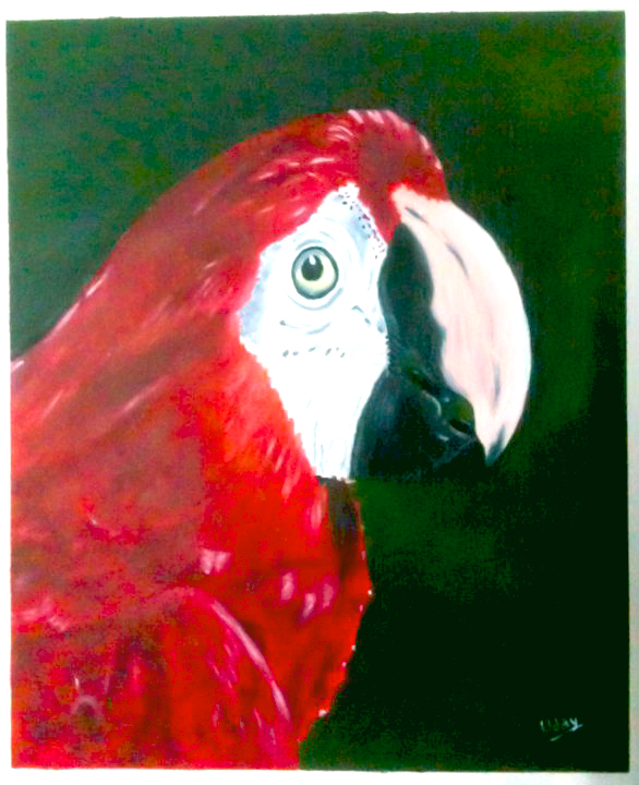 Red Parrot - Oil Painting